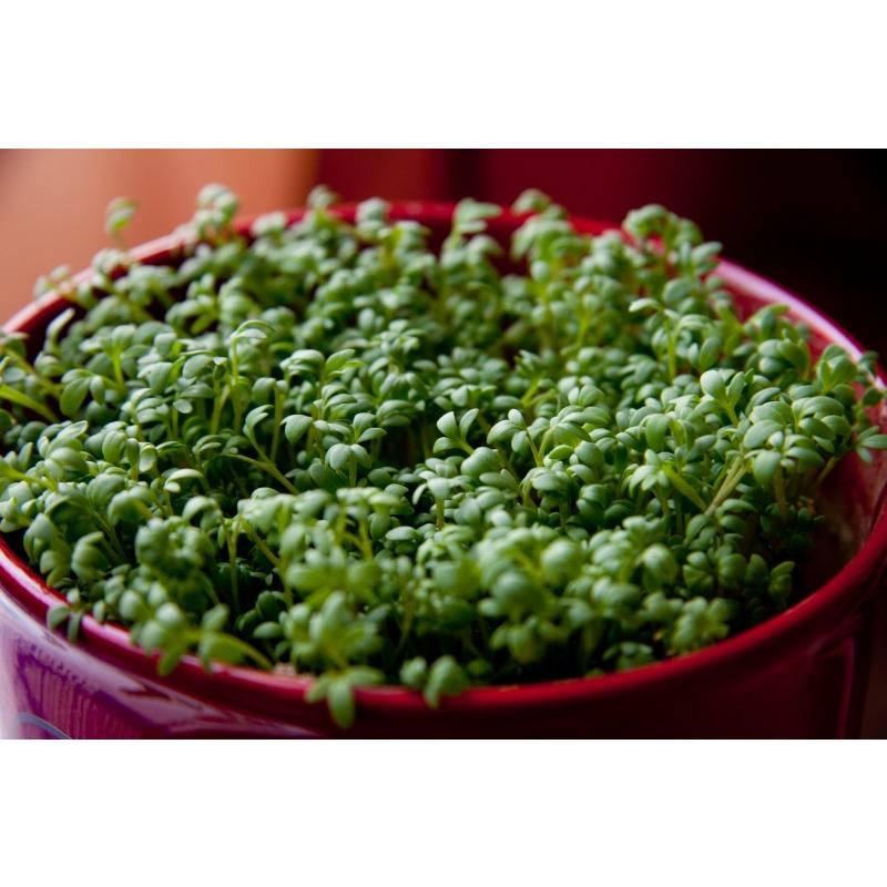 Alfalfa ehk Lutsern-K vitam, mineraalid  120tbl. 400mgToidulisand