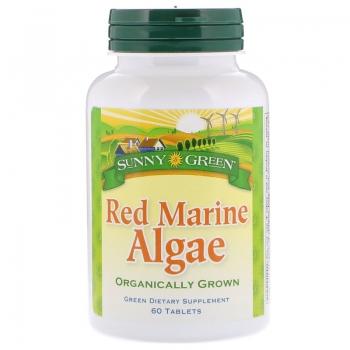 Sunny Green Red Marine Algae.jpg