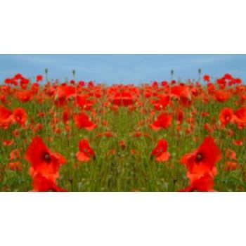 Poppy2004_ADJ_blur.jpg